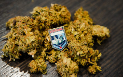 For Veterans with PTSD, the heart work is also the hard work, and medical marijuana helps ease the journey